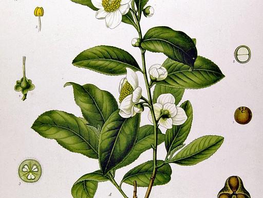 TEA DOES NOT KILL THE COVID-19 VIRUS
