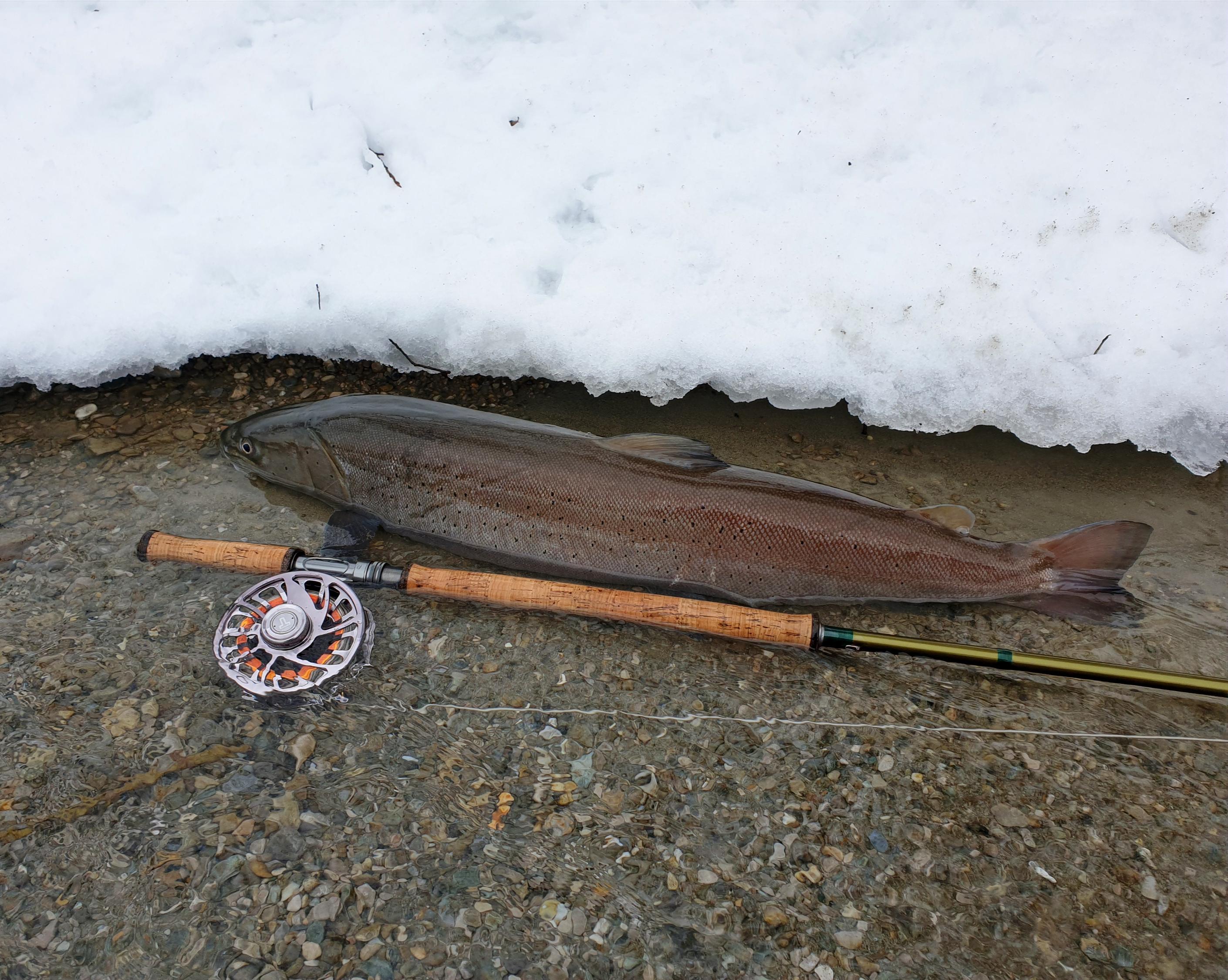 Fliegenfischer Guiding auf Huchen