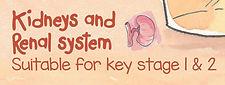 Kidney Renal