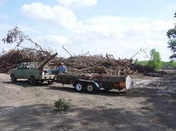 pecan logs5806.jpg