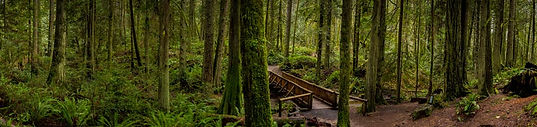 Grand Forest on Bainbridge Island. Panoramic photography by Richard Malzahn