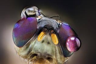 Macrofotografía extrema: Lo que el ojo no ve. El fotógrafo Javier Rupérez cuenta cómo fotografía los