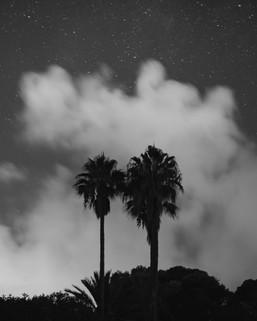 Mallorca-palms.jpg
