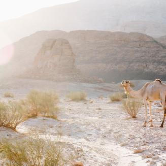 the calling |  Sinai desert, 2019