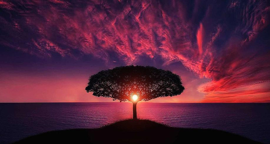 tree sunset sea.jpg