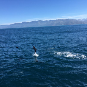 Video - Nature at its Best (Dolphin Backflipping)