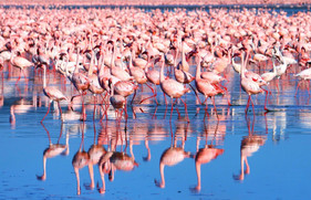 nakurumeer-kenia-flamingos 2.jpg