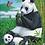 "Thumbnail: Puzzle ""Panda"""
