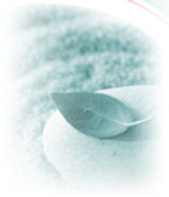 LOGO Pebble and leaf.png