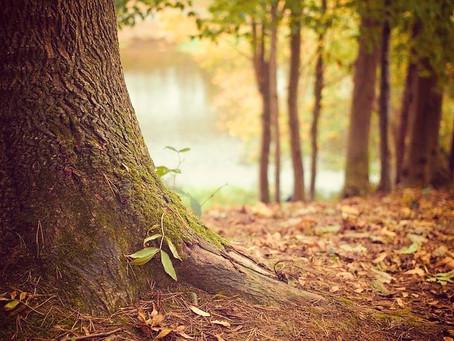 Les énergies de l'automne : préparer le repos et le retour à Soi