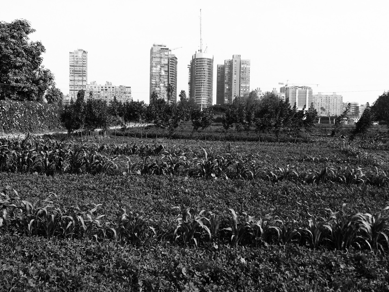 Geziret Al Dahab 3 - Island Farms