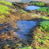 seaweed-2363184_960_720.jpg