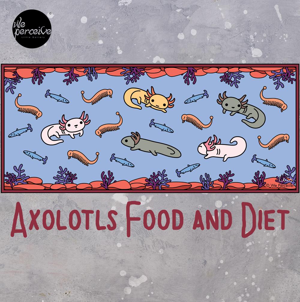 Axolotls Food and Diet Illustration Art Design