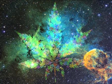 Cannabis, Opio, Coca: signaturas astrológicas y herbolaria mágica.
