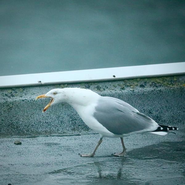 squawk.jpeg
