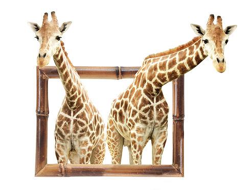 Giraffen mit Rahmen.jpg