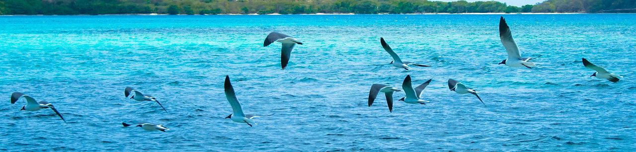 Snorkelling in Grenada