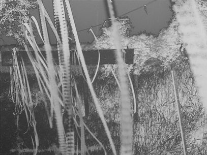 Black and white image of films hanged from line outdoor
