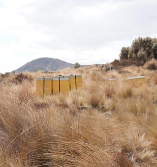 Hinterland beehive New Zealand