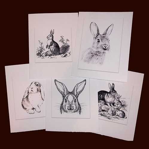 Bunny Rabbit Note Cards Greeting Cards Vintage B&W Sketches Boxed Set of 5