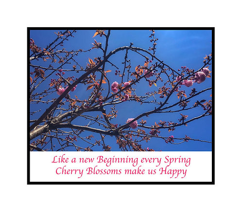 Greeting Note Card - Cherry Blossoms