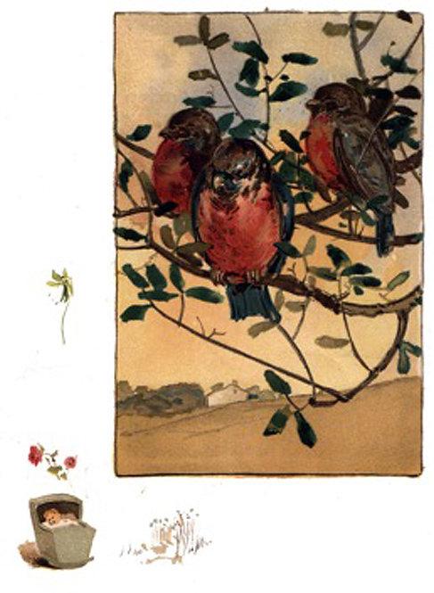 Greeting Card - Robins