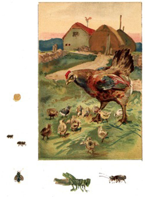 Greeting Card - Hen & Chicks