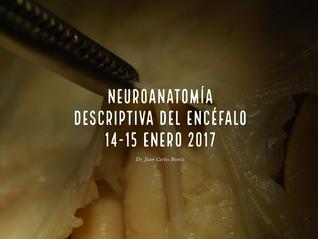 La Neuroanatomía me encanta