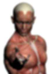 gs34000-110413-humananatomy-malemuscles4