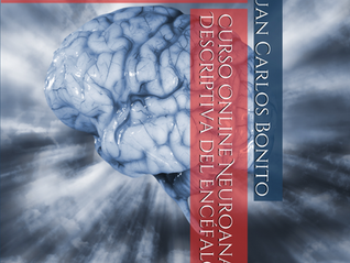 Ya disponible Curso Online Neuroanatomía Descriptiva del Encéfalo