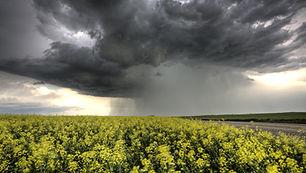 weather_radar.jpg