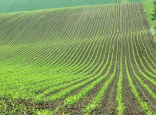 Agronomists (1).jpg