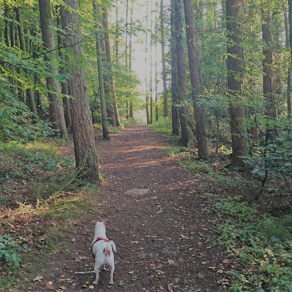 Mojo adventures with dogs. Adventure Accessories