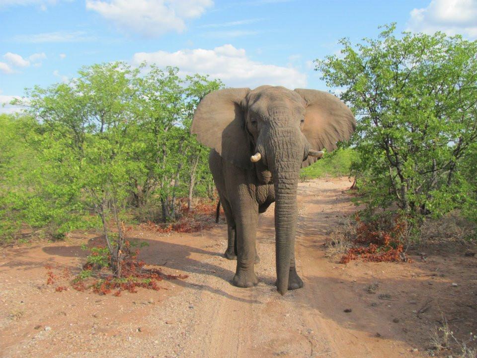 Elephant, wildlife park, South Africa. Adventure Accessories
