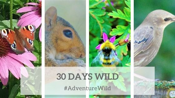 30 Days Wild by Adventure Accessories
