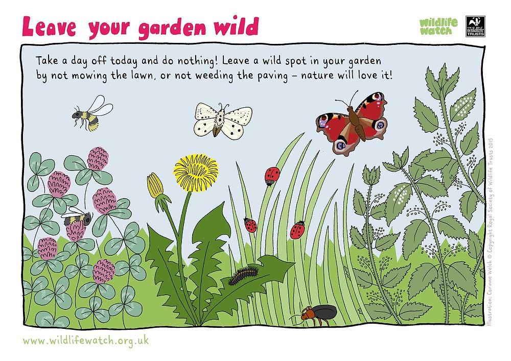 Leave your garden wild - Wildlife Watch. Urban Outdoors, Adventure Accessories