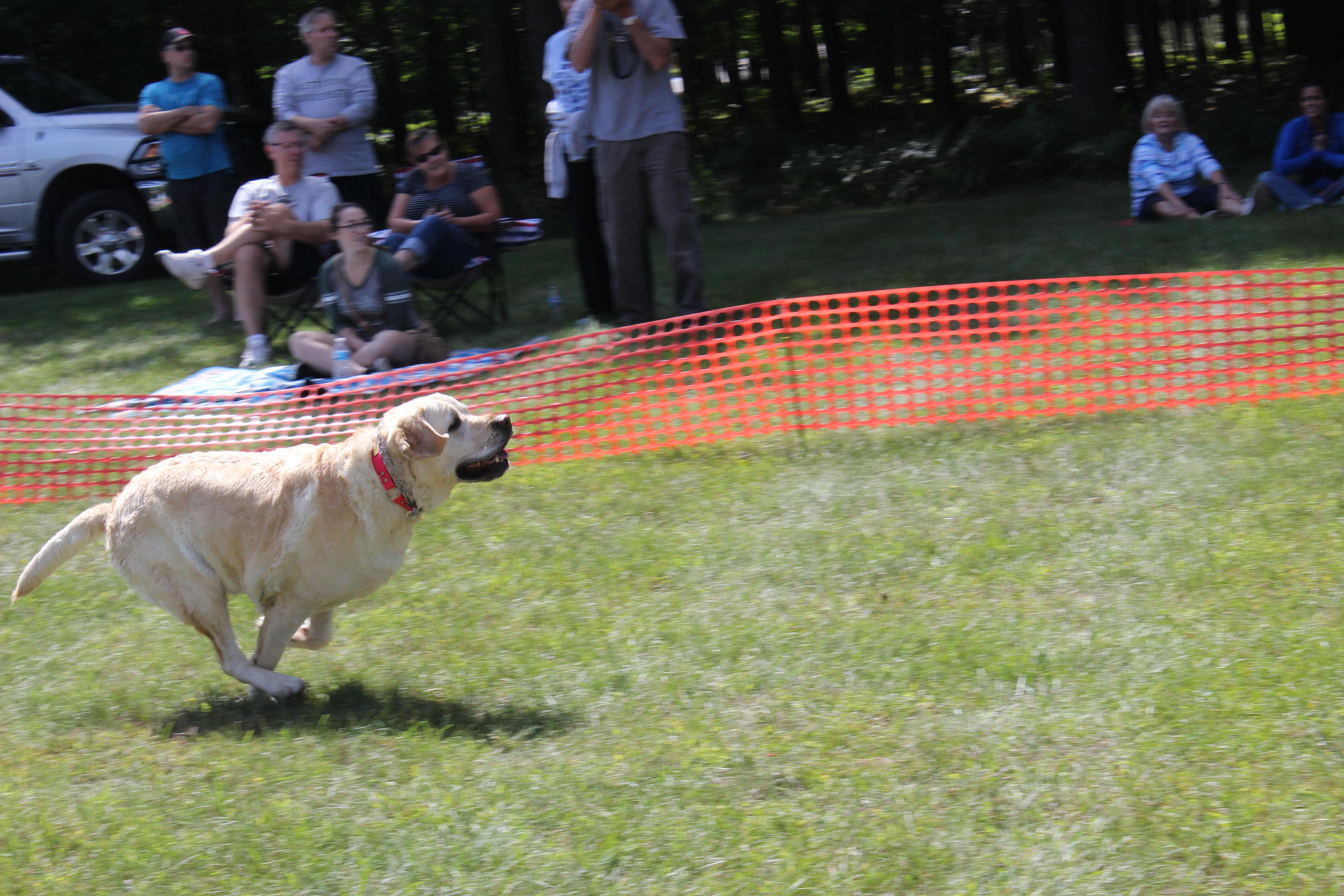 Dog Day 2017 (23)