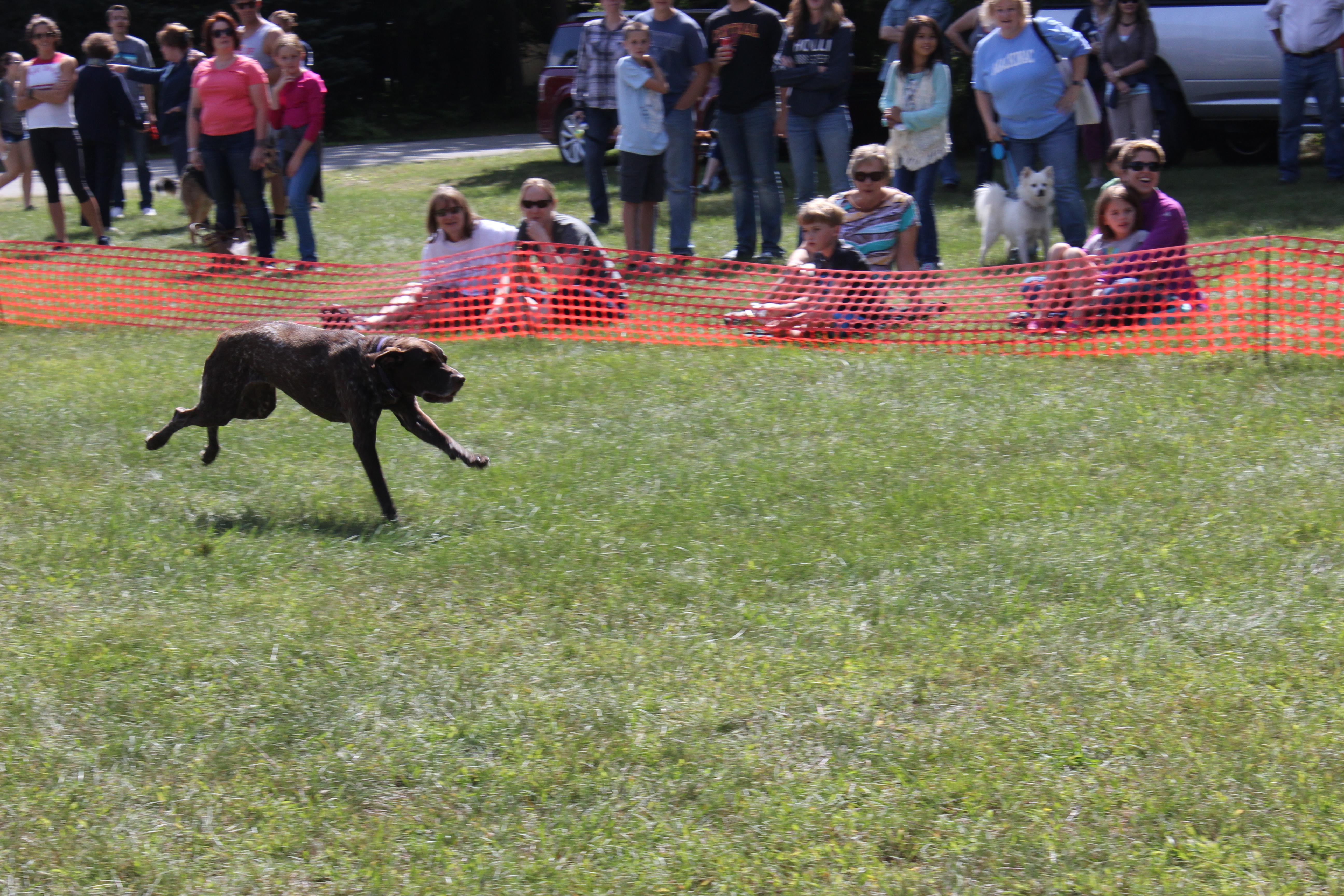 Dog Day 2017 (13)