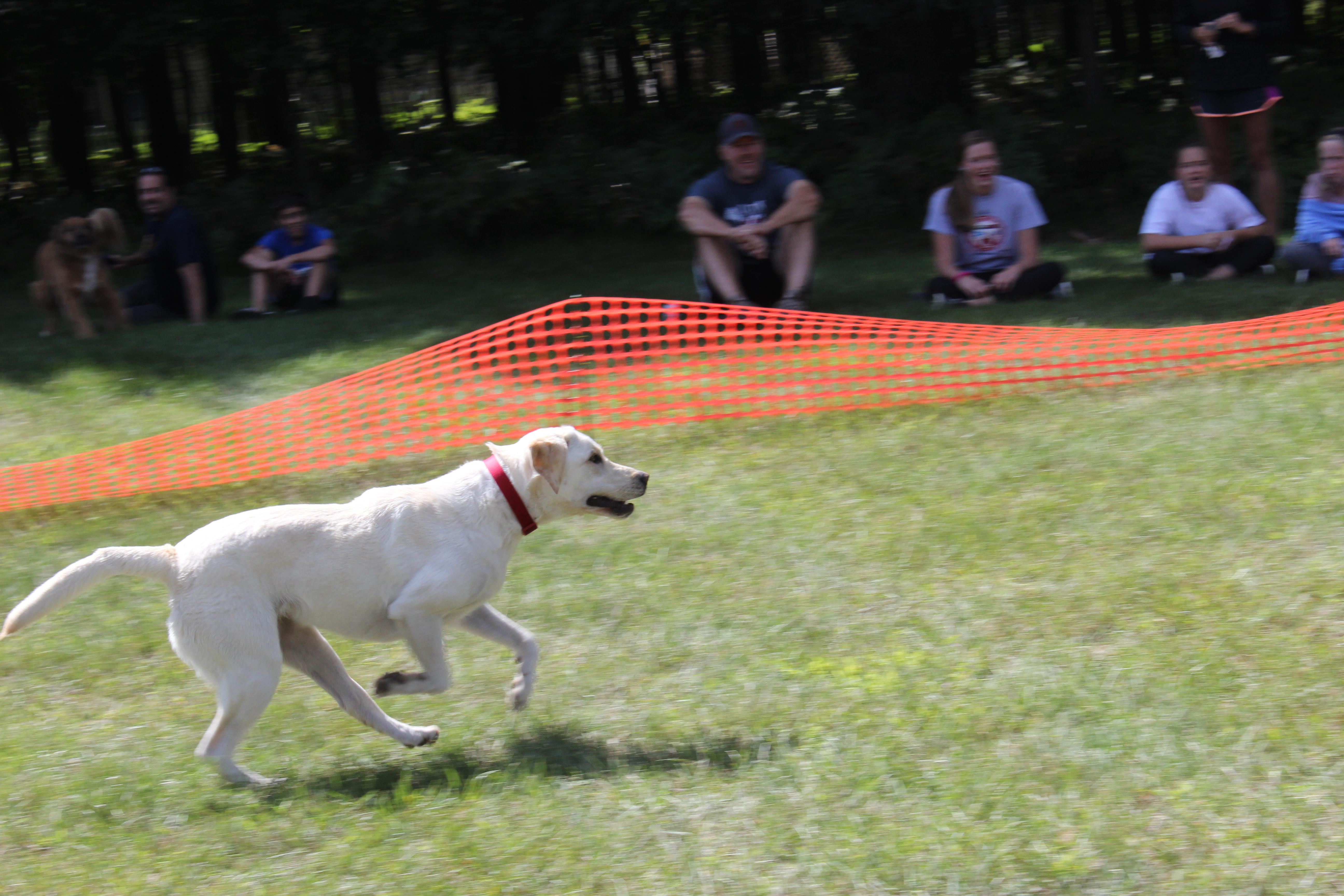 Dog Day 2017 (17)