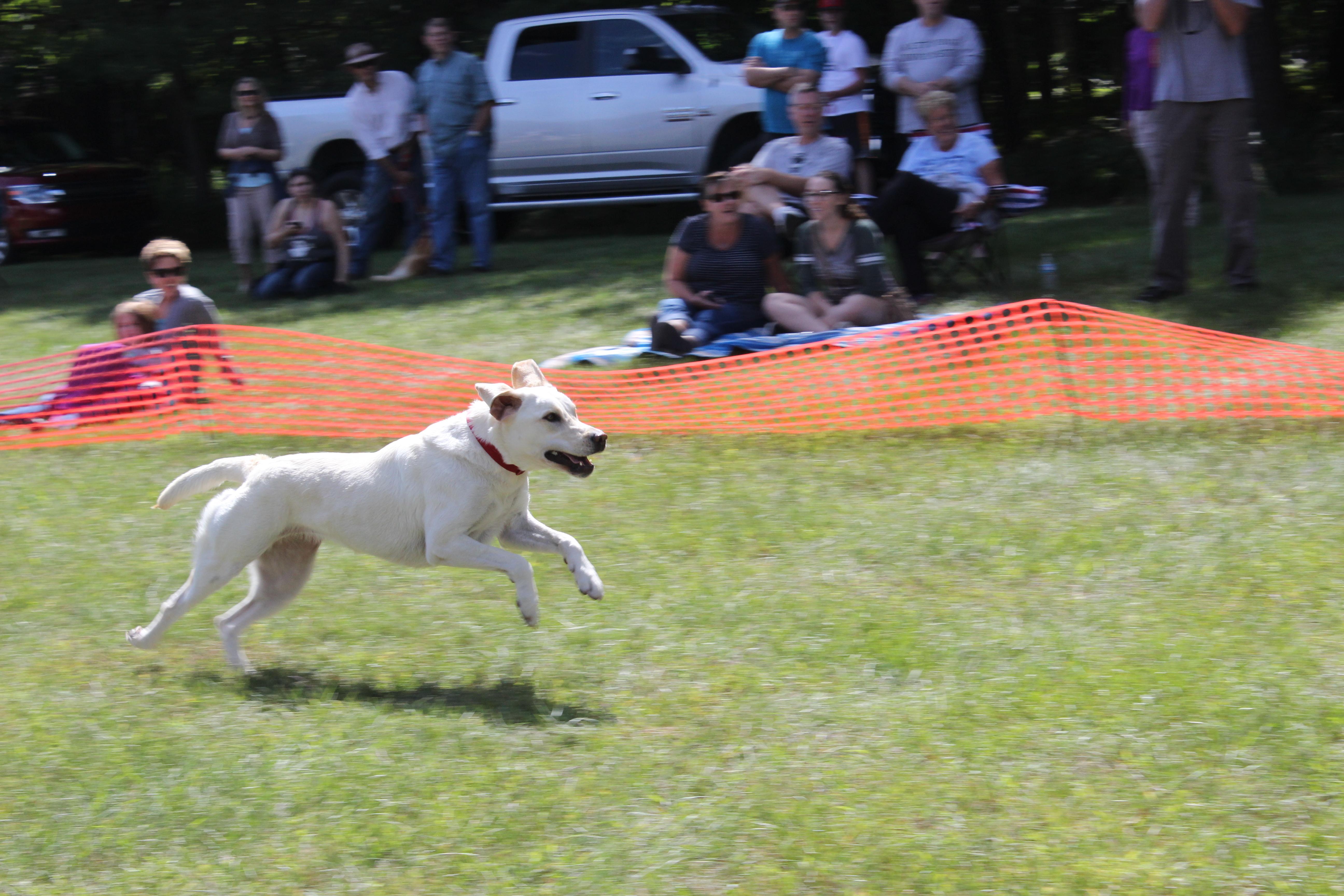 Dog Day 2017 (44)