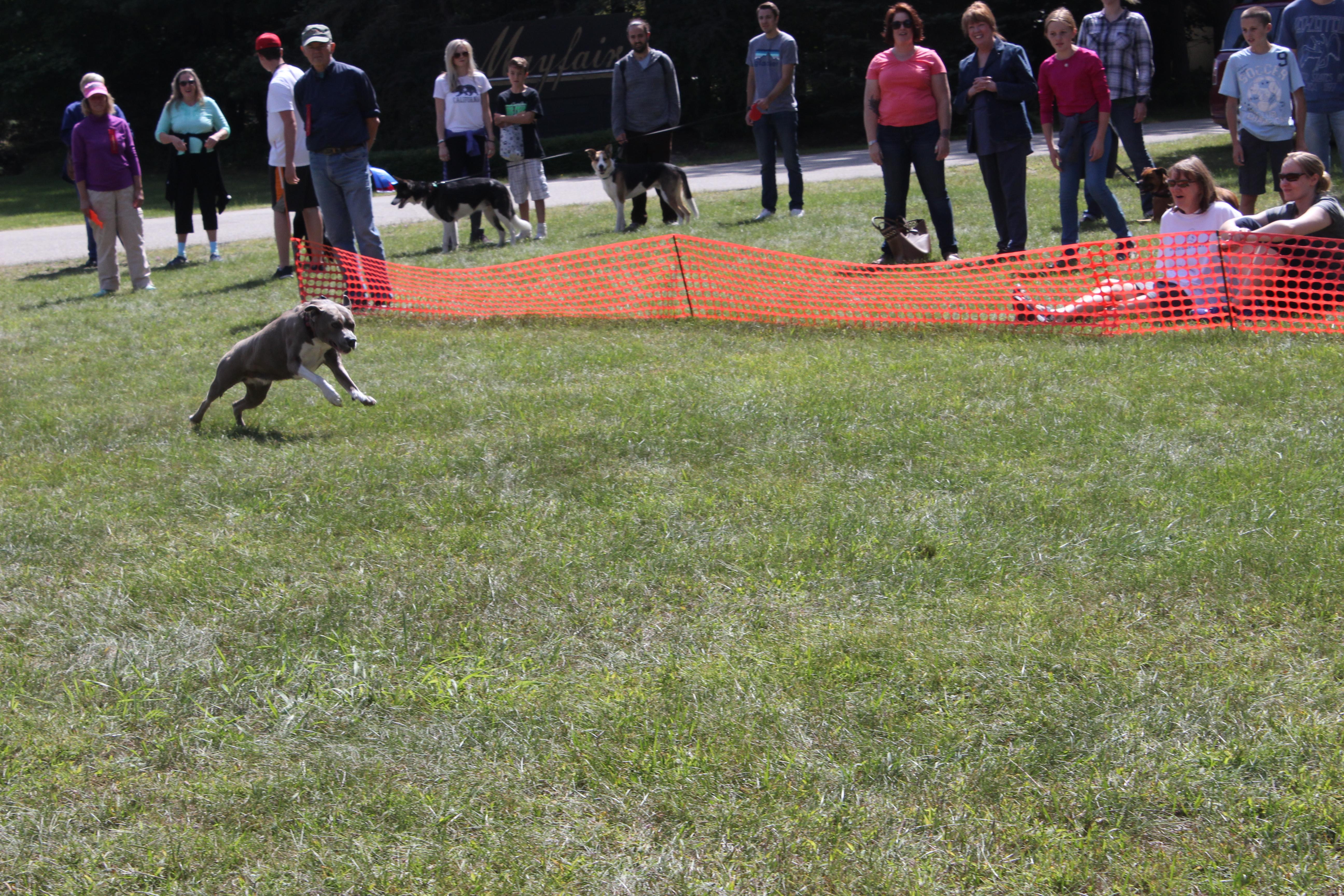 Dog Day 2017 (29)