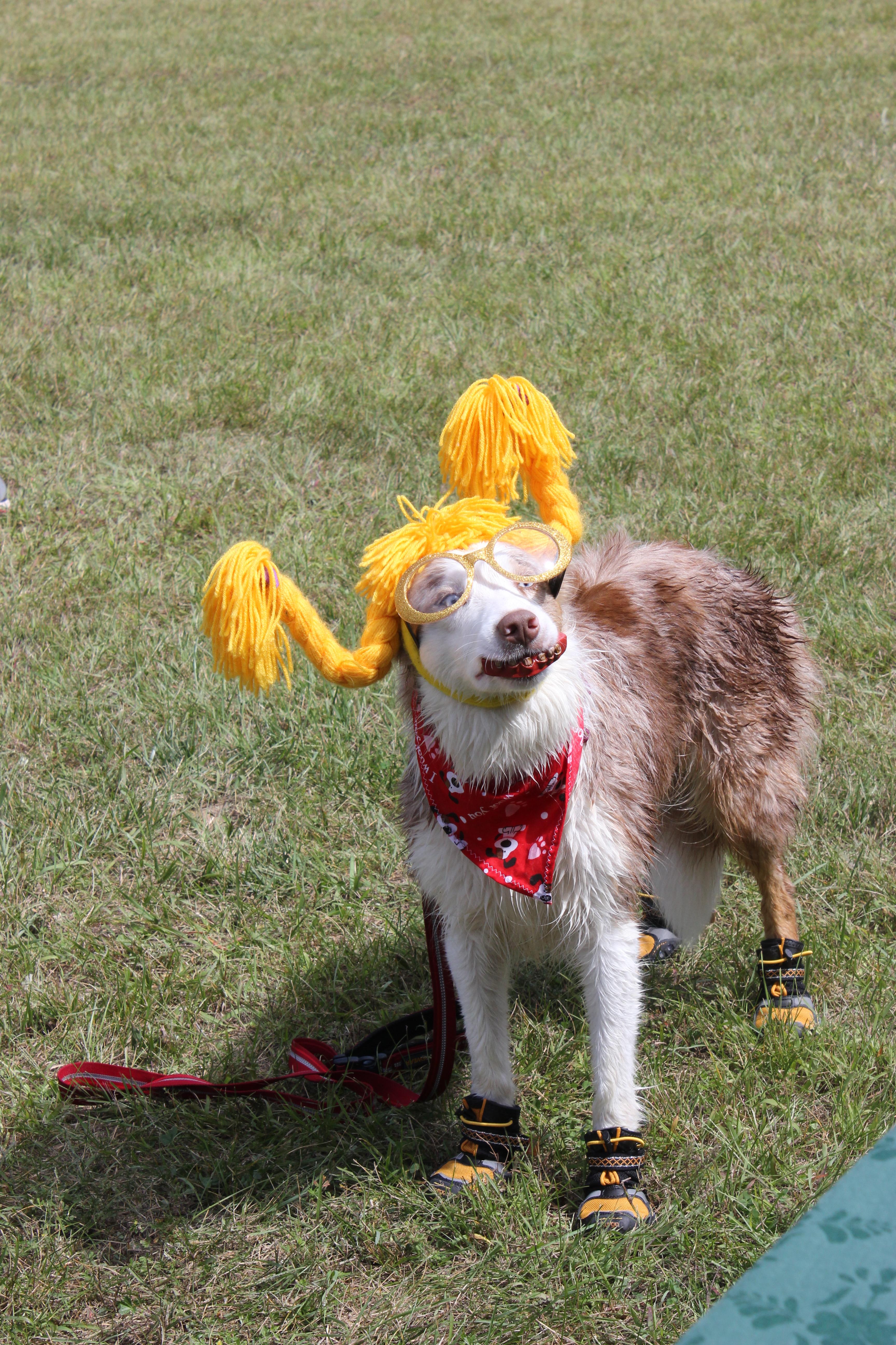Dog Day 2017 (5)