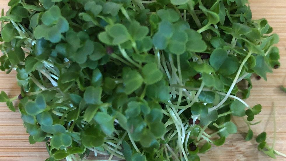 Broccoli Shoots 50g