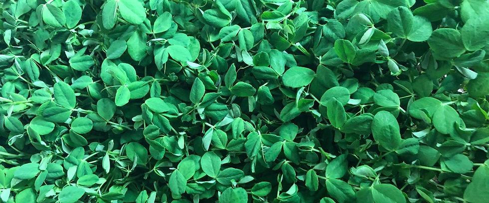 Sweet Prairie Greens