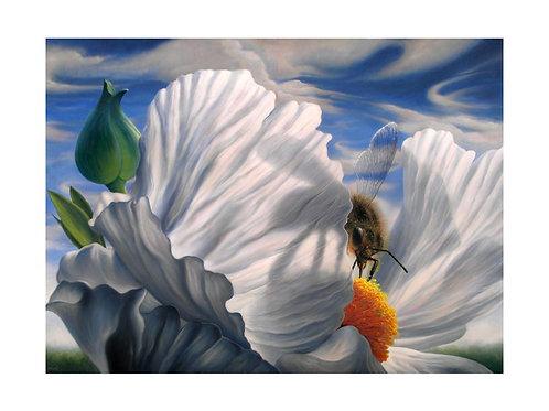 The Honey Bee  print