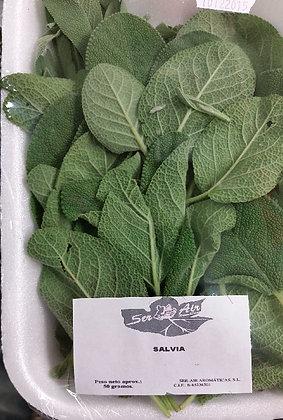 Salvia bandeja