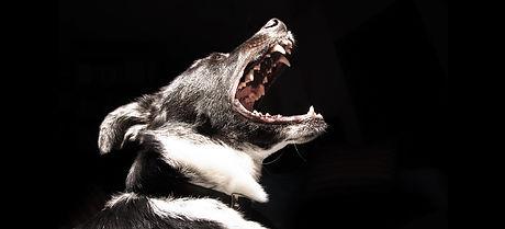 Black Dog_edited.jpg