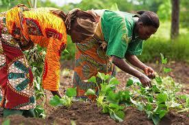 Somaliland - farm.