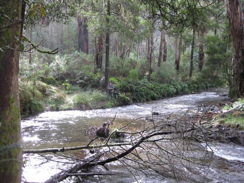 John, Upper Goulburn River, near Woods Point