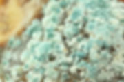mold closeup.jpg